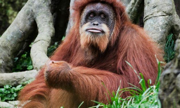 Borneo, Malaysia   Infant Products